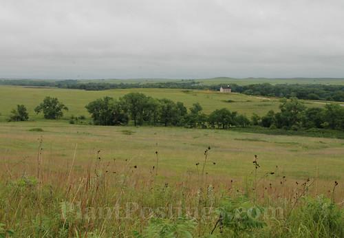 prairie scene 2