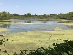 Mitchell Lake Audubon