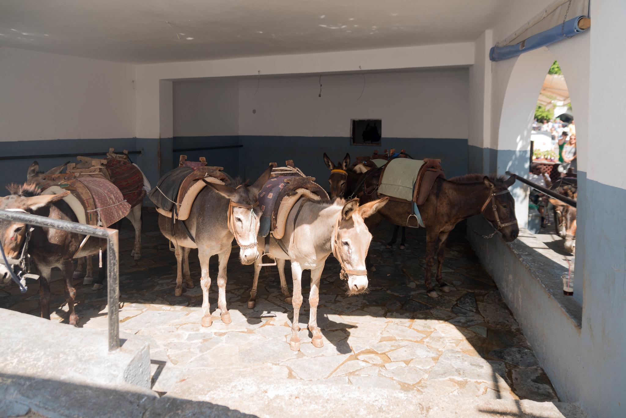 Lindos Greece donkey stall