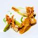 鹹鮮涓豆腐佐百合絲滑濃醬