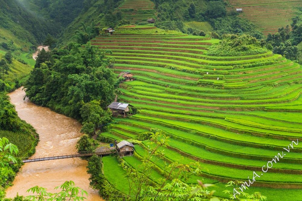 Tranh phong canh ruong bac thang dep nhat Viet Nam tai AmiA