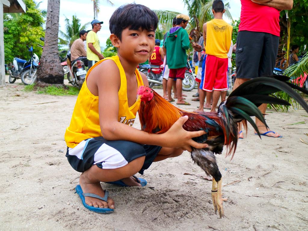 Peleas de gallos Filipinas