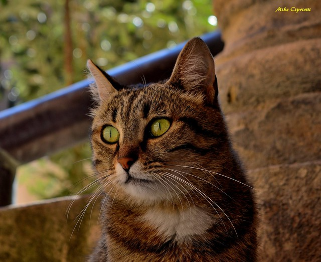 Il gatto delle 7chiese...Oltre alle 7vite...1