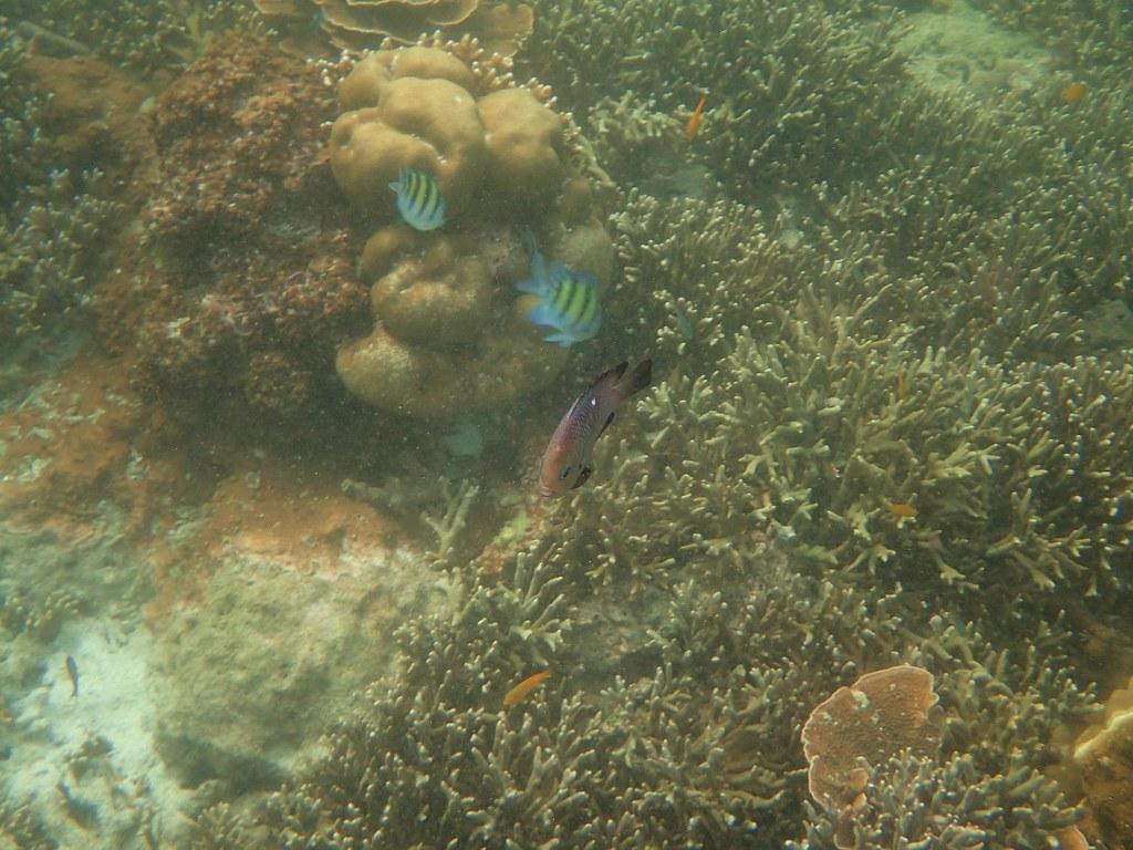 Andaman4