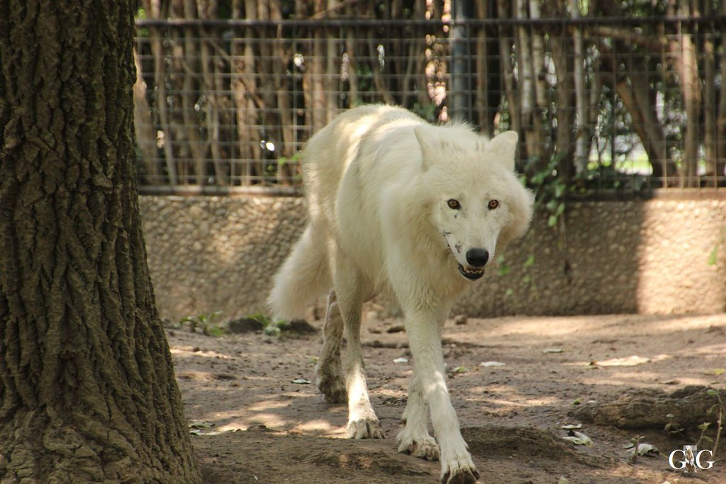 Zoo Besuch 11.07.201720