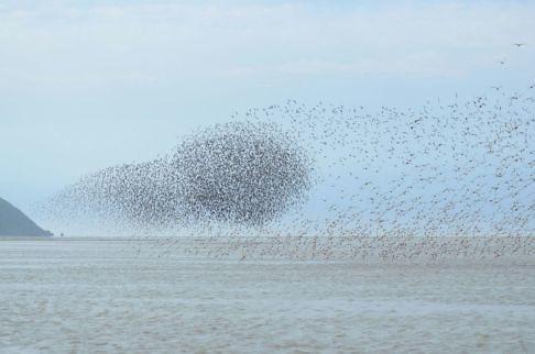Shorebirds in Khairusova-Belogolovaya, June 2017. © Dmitry Dorofeev