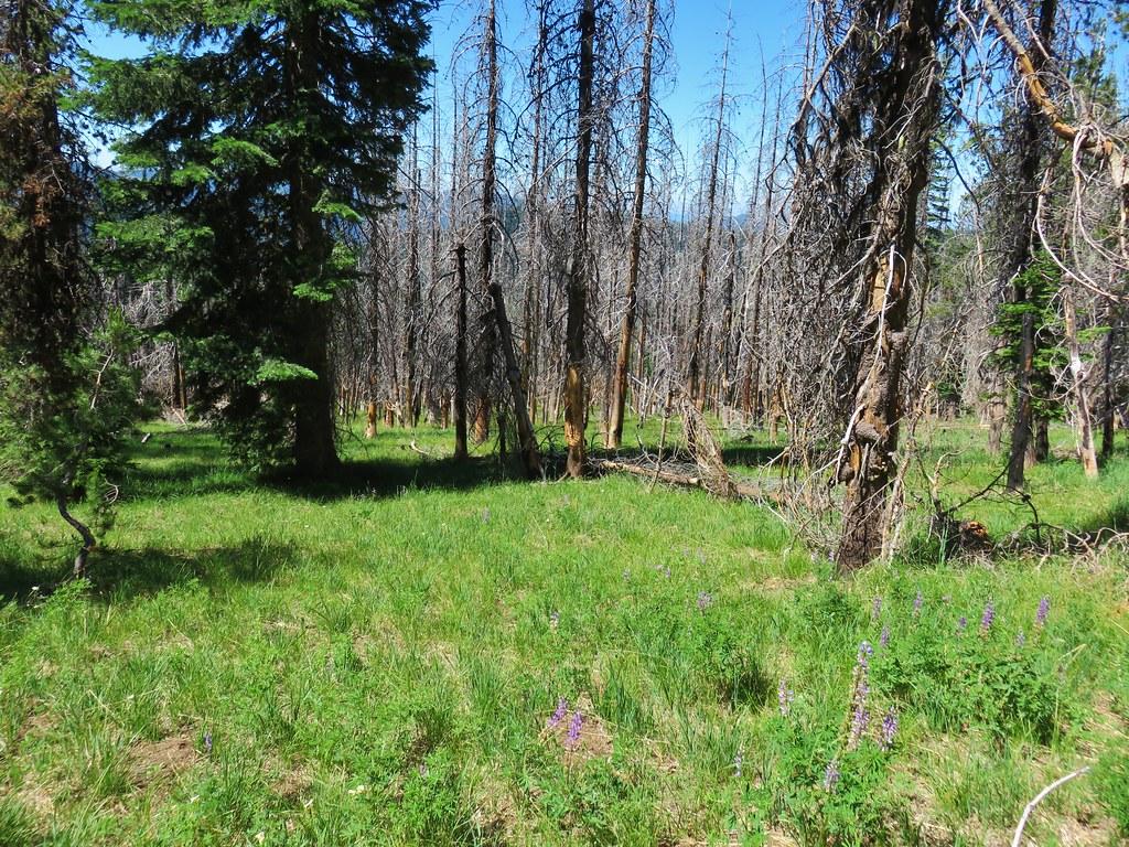 Meadow along the Chucksney Mountain Trail