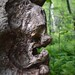 aOld woman tree