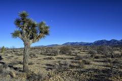 Mojave Desert at Pearblossom, California 717