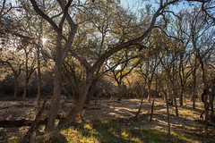 Forest - O.P. Schnabel Park - San Antonio - Texas - 29 January 2017
