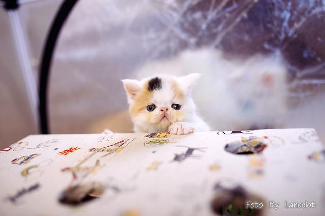 加菲猫@不点儿