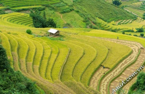 phong-canh-dep-rung-nui-thien-nhien-dong-lua-viet-nam-amia-ist643230326