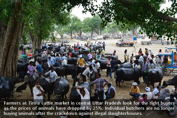UP's Slaughterhouse Crackdown: Butchers, Farmers, Traders Hit, Big Businesses Gain