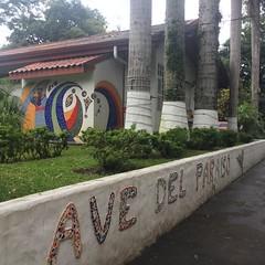 Costa Rica 2017 #puravida