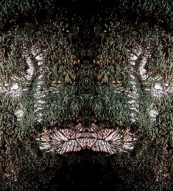 brooding tusker