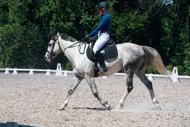 20170709 Grif Dressage Tests-30