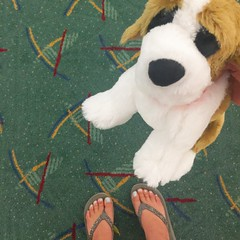 Timberline Lodge dog and the PDX '90s Carpet