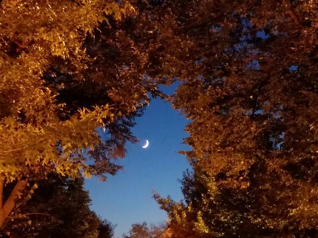 Dupont Moon