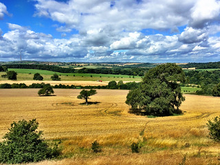 A Yorkshire Harvest