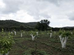 Crete-1010901