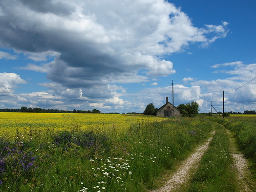 estonia summer landscape barn viisu field road