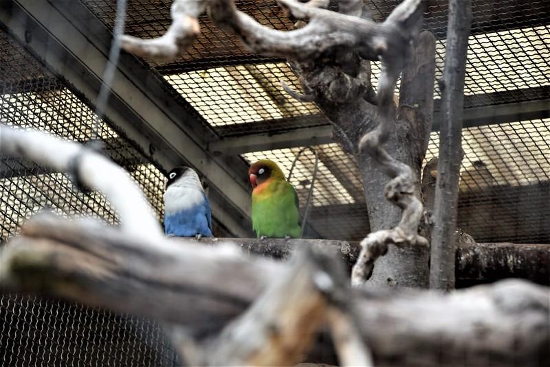 Aviary Solothurn 14.07 (6)