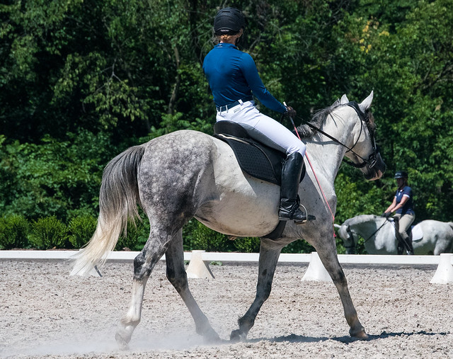 20170709 Grif Dressage Tests-37