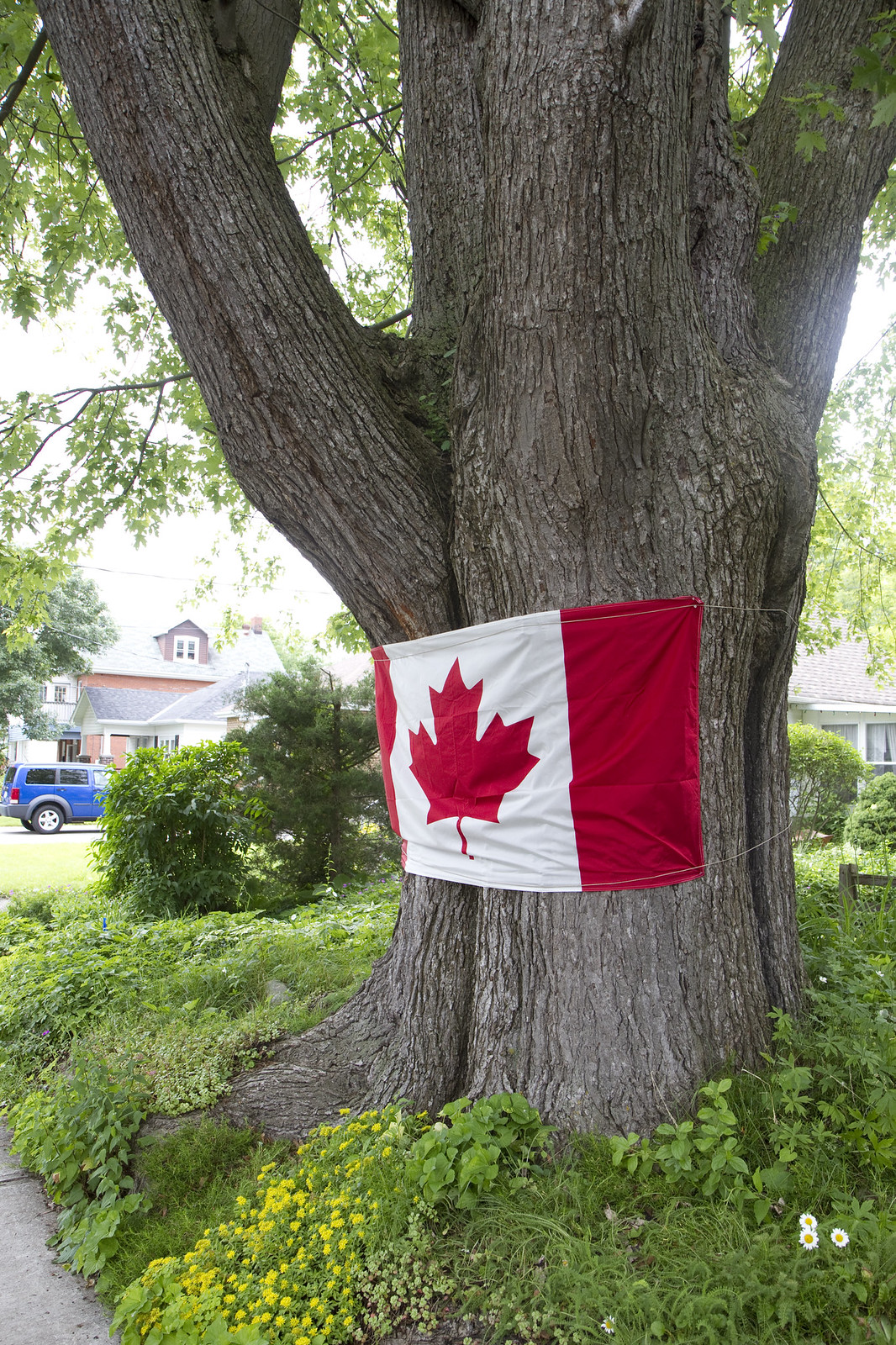 tree hugging flag