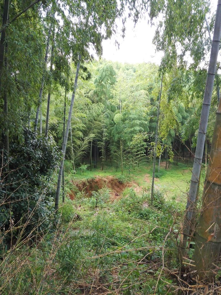 竹林公園に謎の穴