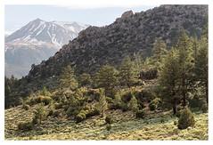 Backlit forest and dana plateau