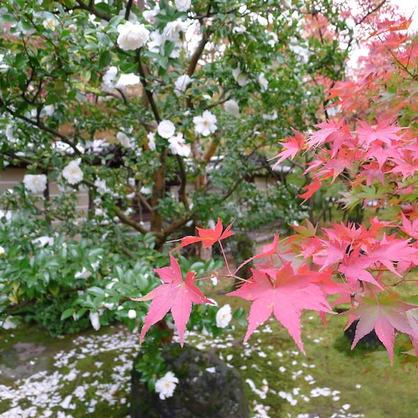 202-Kyoto