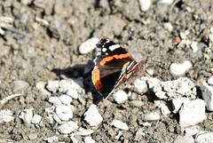 HolderButterfly