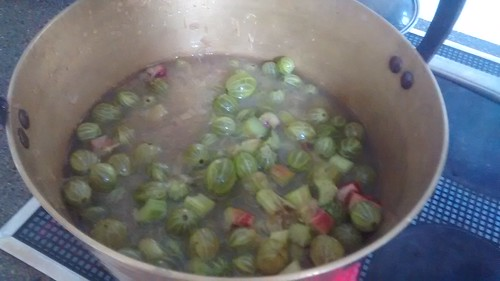 rhubarb and gooseberry jam July 17 1