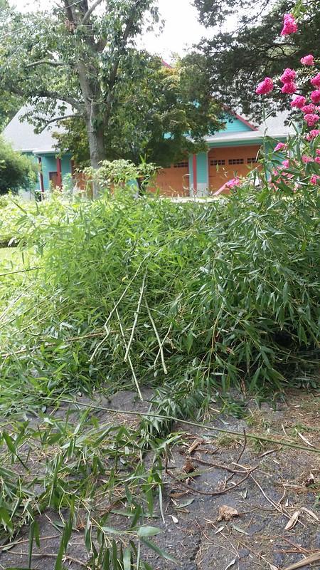Bamboo battles 2017