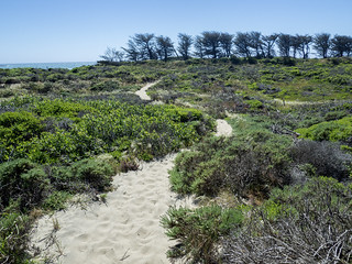 On the Año Nuevo Point Trail