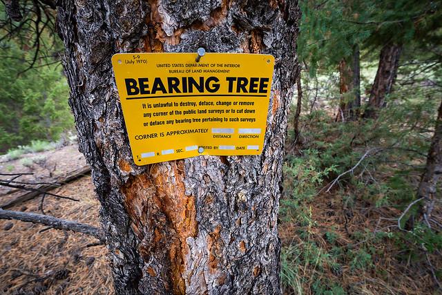 Bearing Tree