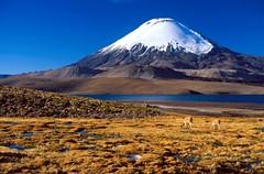Arica ? P.N. Lauca ? Chungara Lake & Volcano718.png