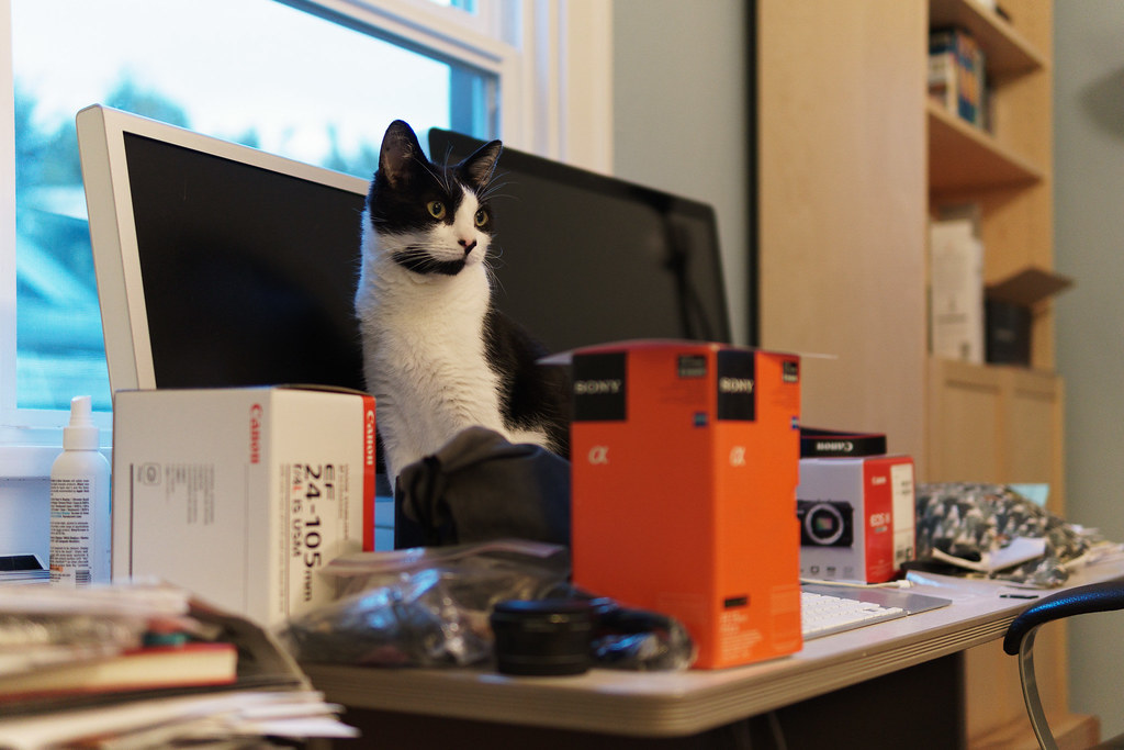 Our cat Boo sits among cameras and lenses