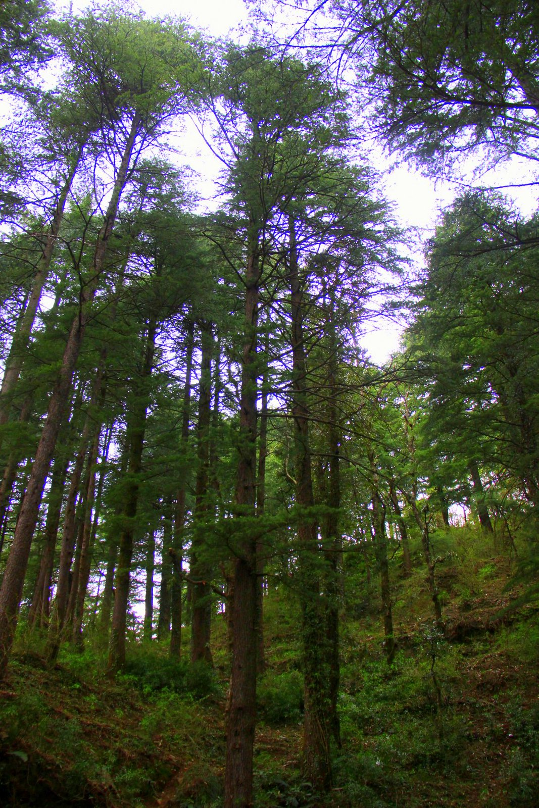 The pine forests and waterfalls around Dharamkot are great for hiking