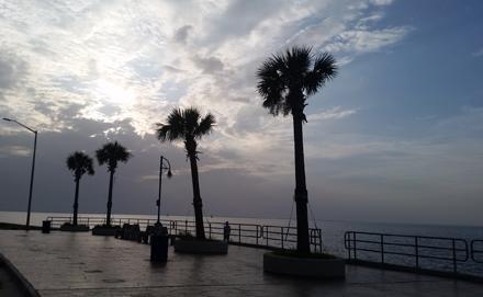 Lakefront Palms