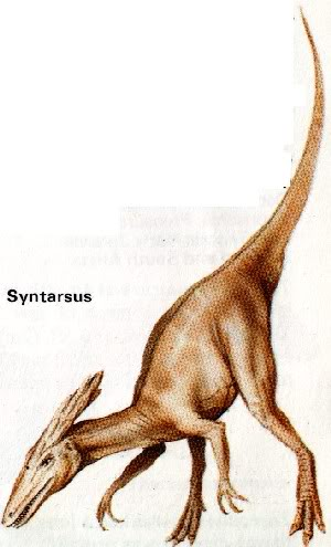 Syntarsus