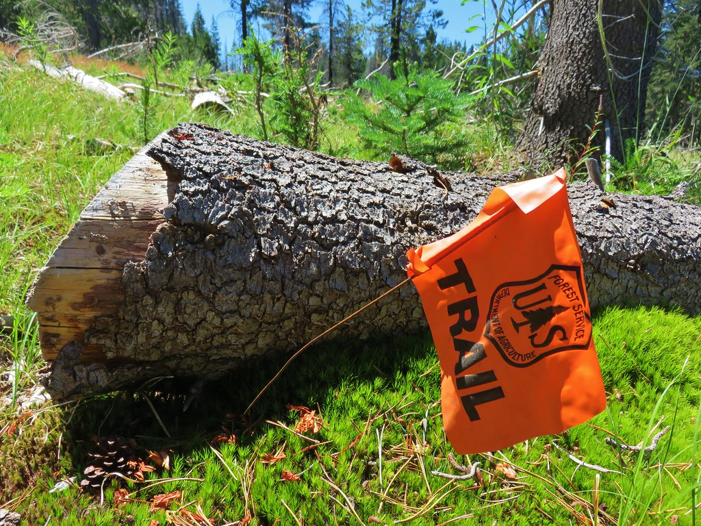 Forest Service Trail flag