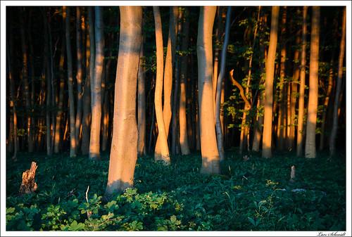 Im tiefen, dunklen Wald