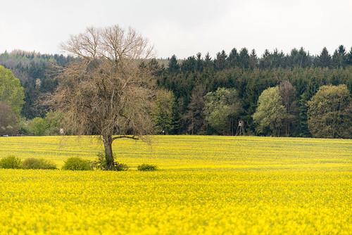 019_Flickr Landschaft.jpg