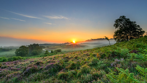 newforest rockfordcommon tree sun sunrise mist heather bracken
