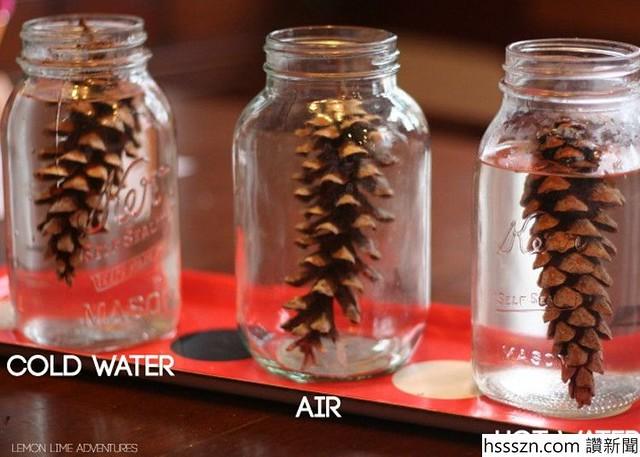 pine-cones-750x535_750_535
