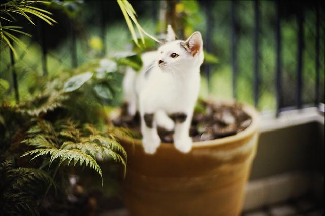 Zoom, o gatinho