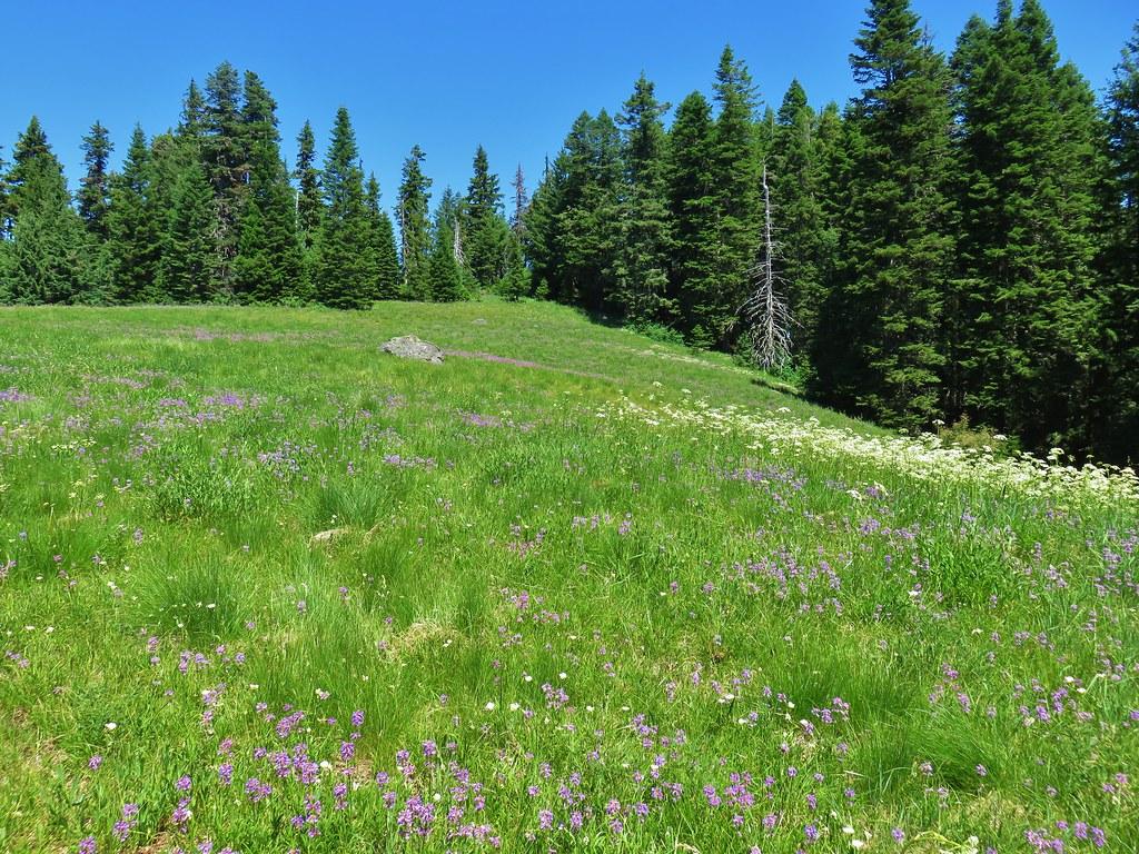 Wildflower meadow along the Grasshopper Trail