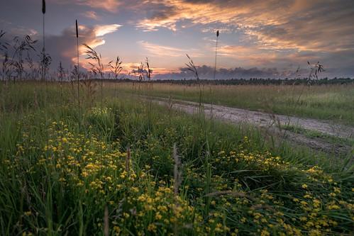 canoneos5dmarkiv yellow flowers sundown road sunset atardecer evening july summer verano julio mi michigan midmichigan rockroad rockedroad path