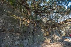 Cliff - O.P. Schnabel Park - San Antonio - Texas - 29 January 2017